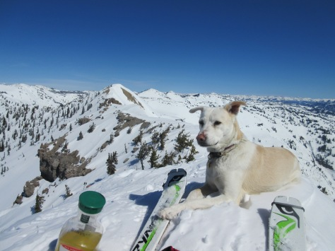 Maestra chilling atop Point 9560+.  Ferry Peak proper (elev. 9612') is that knob in the background.