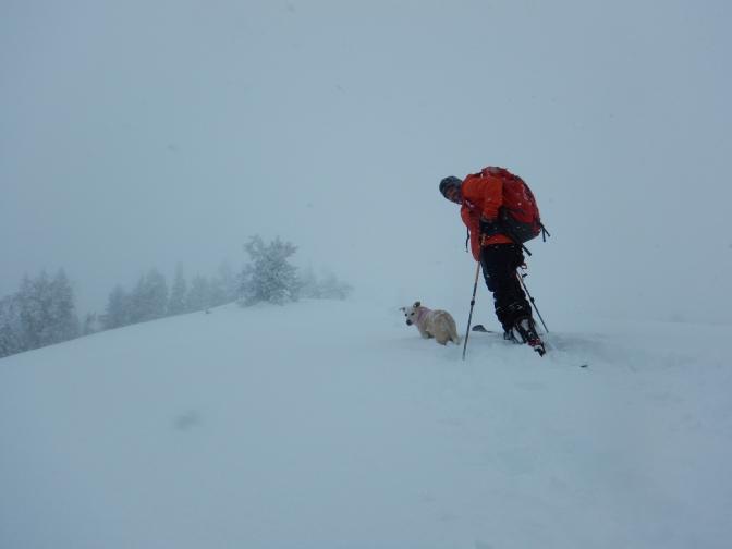 Wydaho Snow: 1.15.16: Ferry West Storm Skiing
