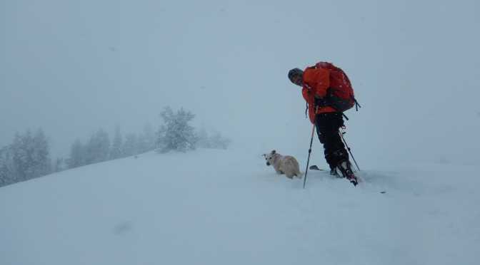 Wydaho Snow: 1.15.16: Ferry West Storm Skiing